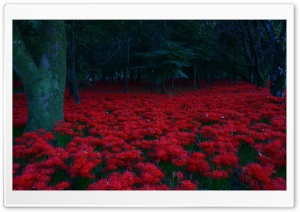 Red Flowers, Forest HD Wide Wallpaper for Widescreen