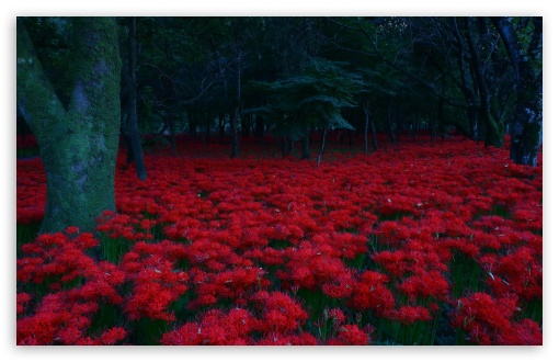 Red Flowers, Forest ❤ 4K UHD Wallpaper for Wide 16:10 5:3 Widescreen WHXGA WQXGA WUXGA WXGA WGA ; UltraWide 21:9 ; 4K UHD 16:9 Ultra High Definition 2160p 1440p 1080p 900p 720p ; Standard 4:3 5:4 3:2 Fullscreen UXGA XGA SVGA QSXGA SXGA DVGA HVGA HQVGA ( Apple PowerBook G4 iPhone 4 3G 3GS iPod Touch ) ; Smartphone 16:9 3:2 5:3 2160p 1440p 1080p 900p 720p DVGA HVGA HQVGA ( Apple PowerBook G4 iPhone 4 3G 3GS iPod Touch ) WGA ; Tablet 1:1 ; iPad 1/2/Mini ; Mobile 4:3 5:3 3:2 16:9 5:4 - UXGA XGA SVGA WGA DVGA HVGA HQVGA ( Apple PowerBook G4 iPhone 4 3G 3GS iPod Touch ) 2160p 1440p 1080p 900p 720p QSXGA SXGA ;