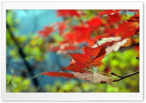 Red Foliage, Autumn HD Wide Wallpaper for Widescreen