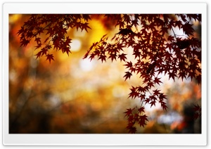 Red Foliage, Bokeh HD Wide Wallpaper for Widescreen