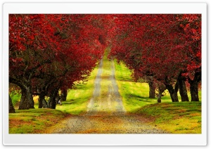 Red Foliage Trees Road HD Wide Wallpaper for Widescreen