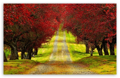 Red Foliage Trees Road ❤ 4K UHD Wallpaper for Wide 16:10 5:3 Widescreen WHXGA WQXGA WUXGA WXGA WGA ; 4K UHD 16:9 Ultra High Definition 2160p 1440p 1080p 900p 720p ; Standard 4:3 5:4 3:2 Fullscreen UXGA XGA SVGA QSXGA SXGA DVGA HVGA HQVGA ( Apple PowerBook G4 iPhone 4 3G 3GS iPod Touch ) ; Smartphone 5:3 WGA ; Tablet 1:1 ; iPad 1/2/Mini ; Mobile 4:3 5:3 3:2 16:9 5:4 - UXGA XGA SVGA WGA DVGA HVGA HQVGA ( Apple PowerBook G4 iPhone 4 3G 3GS iPod Touch ) 2160p 1440p 1080p 900p 720p QSXGA SXGA ;