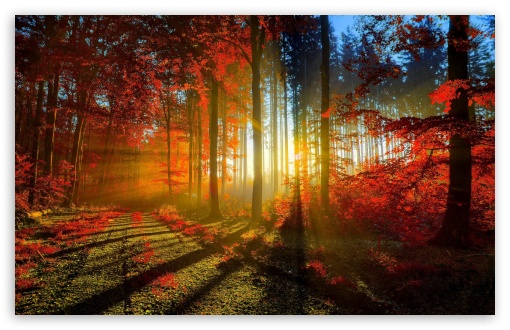 Red Forest HD wallpaper for Standard 4:3 5:4 Fullscreen UXGA XGA SVGA QSXGA SXGA ; Wide 16:10 5:3 Widescreen WHXGA WQXGA WUXGA WXGA WGA ; HD 16:9 High Definition WQHD QWXGA 1080p 900p 720p QHD nHD ; Other 3:2 DVGA HVGA HQVGA devices ( Apple PowerBook G4 iPhone 4 3G 3GS iPod Touch ) ; Mobile VGA WVGA iPhone iPad PSP Phone - VGA QVGA Smartphone ( PocketPC GPS iPod Zune BlackBerry HTC Samsung LG Nokia Eten Asus ) WVGA WQVGA Smartphone ( HTC Samsung Sony Ericsson LG Vertu MIO ) HVGA Smartphone ( Apple iPhone iPod BlackBerry HTC Samsung Nokia ) Sony PSP Zune HD Zen ; Tablet 2 Android ; Dual 4:3 5:4 16:10 5:3 16:9 UXGA XGA SVGA QSXGA SXGA WHXGA WQXGA WUXGA WXGA WGA WQHD QWXGA 1080p 900p 720p QHD nHD ;