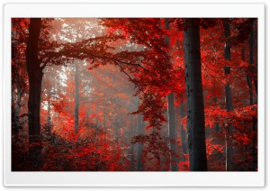Red Forest HD Wide Wallpaper for Widescreen