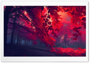 Red Forest Ultra HD Wallpaper for 4K UHD Widescreen desktop, tablet & smartphone