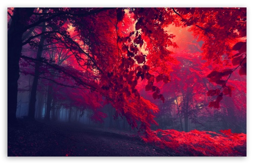 Red Forest HD wallpaper for Wide 16:10 5:3 Widescreen WHXGA WQXGA WUXGA WXGA WGA ; HD 16:9 High Definition WQHD QWXGA 1080p 900p 720p QHD nHD ; Standard 4:3 5:4 3:2 Fullscreen UXGA XGA SVGA QSXGA SXGA DVGA HVGA HQVGA devices ( Apple PowerBook G4 iPhone 4 3G 3GS iPod Touch ) ; Tablet 1:1 ; iPad 1/2/Mini ; Mobile 4:3 5:3 3:2 16:9 5:4 - UXGA XGA SVGA WGA DVGA HVGA HQVGA devices ( Apple PowerBook G4 iPhone 4 3G 3GS iPod Touch ) WQHD QWXGA 1080p 900p 720p QHD nHD QSXGA SXGA ; Dual 4:3 5:4 UXGA XGA SVGA QSXGA SXGA ;