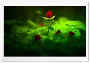Red Forest Flowers HD Wide Wallpaper for Widescreen