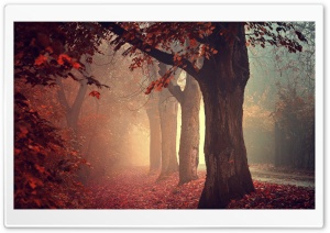 Red Forest Path HD Wide Wallpaper for Widescreen