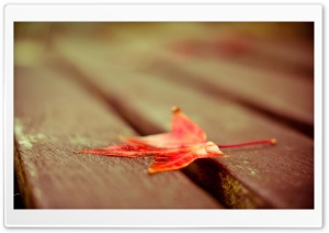 Red Leaf Down HD Wide Wallpaper for Widescreen