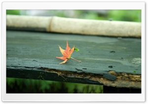 Red Leaf On The Bench HD Wide Wallpaper for Widescreen