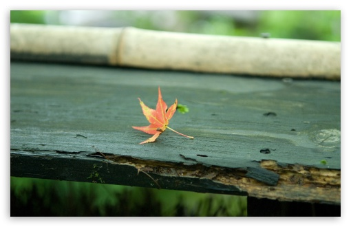 Red Leaf On The Bench HD wallpaper for Wide 16:10 5:3 Widescreen WHXGA WQXGA WUXGA WXGA WGA ; HD 16:9 High Definition WQHD QWXGA 1080p 900p 720p QHD nHD ; Standard 4:3 5:4 3:2 Fullscreen UXGA XGA SVGA QSXGA SXGA DVGA HVGA HQVGA devices ( Apple PowerBook G4 iPhone 4 3G 3GS iPod Touch ) ; Tablet 1:1 ; iPad 1/2/Mini ; Mobile 4:3 5:3 3:2 16:9 5:4 - UXGA XGA SVGA WGA DVGA HVGA HQVGA devices ( Apple PowerBook G4 iPhone 4 3G 3GS iPod Touch ) WQHD QWXGA 1080p 900p 720p QHD nHD QSXGA SXGA ; Dual 16:10 5:3 16:9 4:3 5:4 WHXGA WQXGA WUXGA WXGA WGA WQHD QWXGA 1080p 900p 720p QHD nHD UXGA XGA SVGA QSXGA SXGA ;