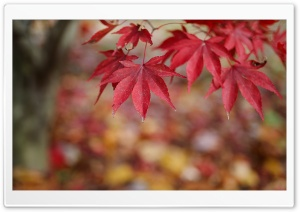 Red Leaves Bokeh HD Wide Wallpaper for Widescreen
