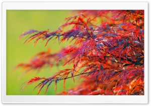 Red Leaves Shrub HD Wide Wallpaper for Widescreen