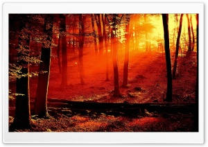 Red Light In The Forest HD Wide Wallpaper for 4K UHD Widescreen desktop & smartphone