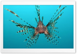 Red Lionfish HD Wide Wallpaper for Widescreen