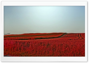 Red Meadow HD Wide Wallpaper for Widescreen
