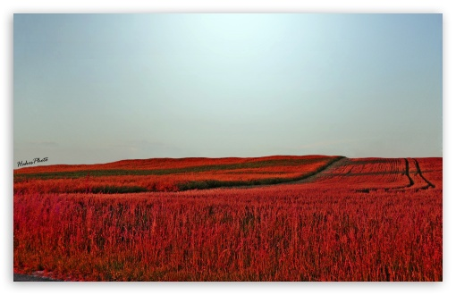 Red Meadow ❤ 4K UHD Wallpaper for Wide 16:10 5:3 Widescreen WHXGA WQXGA WUXGA WXGA WGA ; 4K UHD 16:9 Ultra High Definition 2160p 1440p 1080p 900p 720p ; UHD 16:9 2160p 1440p 1080p 900p 720p ; Standard 4:3 5:4 3:2 Fullscreen UXGA XGA SVGA QSXGA SXGA DVGA HVGA HQVGA ( Apple PowerBook G4 iPhone 4 3G 3GS iPod Touch ) ; Tablet 1:1 ; iPad 1/2/Mini ; Mobile 4:3 5:3 3:2 16:9 5:4 - UXGA XGA SVGA WGA DVGA HVGA HQVGA ( Apple PowerBook G4 iPhone 4 3G 3GS iPod Touch ) 2160p 1440p 1080p 900p 720p QSXGA SXGA ;