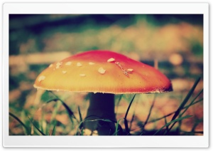 Red Mushroom HD Wide Wallpaper for Widescreen