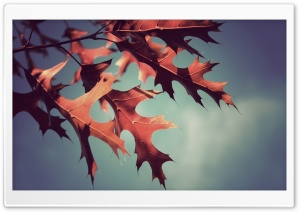 Red Oak Leaves HD Wide Wallpaper for Widescreen