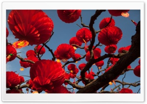 Red Paper Lanterns Tree HD Wide Wallpaper for 4K UHD Widescreen desktop & smartphone