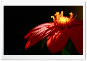 Red Petals HD Wide Wallpaper for Widescreen