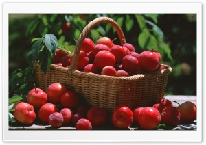 Red Plums In A Basket HD Wide Wallpaper for Widescreen