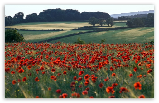 Red Poppies Field ❤ 4K UHD Wallpaper for Wide 16:10 5:3 Widescreen WHXGA WQXGA WUXGA WXGA WGA ; 4K UHD 16:9 Ultra High Definition 2160p 1440p 1080p 900p 720p ; Standard 4:3 5:4 3:2 Fullscreen UXGA XGA SVGA QSXGA SXGA DVGA HVGA HQVGA ( Apple PowerBook G4 iPhone 4 3G 3GS iPod Touch ) ; Tablet 1:1 ; iPad 1/2/Mini ; Mobile 4:3 5:3 3:2 16:9 5:4 - UXGA XGA SVGA WGA DVGA HVGA HQVGA ( Apple PowerBook G4 iPhone 4 3G 3GS iPod Touch ) 2160p 1440p 1080p 900p 720p QSXGA SXGA ;