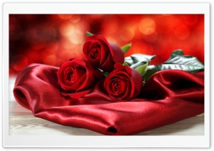 Red Rose HD Wide Wallpaper for Widescreen