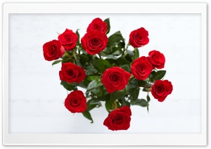 Red Roses HD Wide Wallpaper for Widescreen
