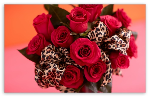 Red Roses Bouquet, Leopard Print Ribbon ❤ 4K UHD Wallpaper for Wide 16:10 5:3 Widescreen WHXGA WQXGA WUXGA WXGA WGA ; 4K UHD 16:9 Ultra High Definition 2160p 1440p 1080p 900p 720p ; UHD 16:9 2160p 1440p 1080p 900p 720p ; Standard 4:3 5:4 3:2 Fullscreen UXGA XGA SVGA QSXGA SXGA DVGA HVGA HQVGA ( Apple PowerBook G4 iPhone 4 3G 3GS iPod Touch ) ; Smartphone 3:2 5:3 DVGA HVGA HQVGA ( Apple PowerBook G4 iPhone 4 3G 3GS iPod Touch ) WGA ; Tablet 1:1 ; iPad 1/2/Mini ; Mobile 4:3 5:3 3:2 16:9 5:4 - UXGA XGA SVGA WGA DVGA HVGA HQVGA ( Apple PowerBook G4 iPhone 4 3G 3GS iPod Touch ) 2160p 1440p 1080p 900p 720p QSXGA SXGA ; Dual 16:10 5:3 16:9 4:3 5:4 WHXGA WQXGA WUXGA WXGA WGA 2160p 1440p 1080p 900p 720p UXGA XGA SVGA QSXGA SXGA ;