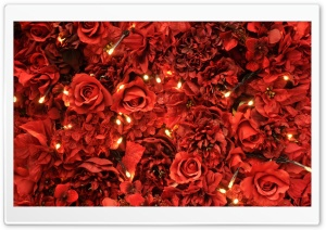 Red Roses Lights HD Wide Wallpaper for Widescreen