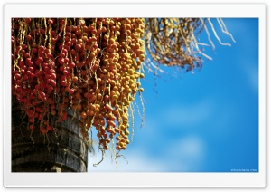 Red Seeds HD Wide Wallpaper for Widescreen