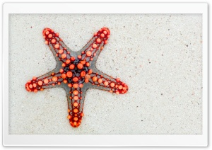 Red Starfish on Beach HD Wide Wallpaper for Widescreen
