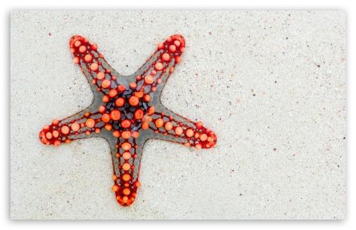 Red Starfish on Beach UltraHD Wallpaper for Wide 16:10 5:3 Widescreen WHXGA WQXGA WUXGA WXGA WGA ; 8K UHD TV 16:9 Ultra High Definition 2160p 1440p 1080p 900p 720p ; UHD 16:9 2160p 1440p 1080p 900p 720p ; Standard 4:3 5:4 3:2 Fullscreen UXGA XGA SVGA QSXGA SXGA DVGA HVGA HQVGA ( Apple PowerBook G4 iPhone 4 3G 3GS iPod Touch ) ; Tablet 1:1 ; iPad 1/2/Mini ; Mobile 4:3 5:3 3:2 16:9 5:4 - UXGA XGA SVGA WGA DVGA HVGA HQVGA ( Apple PowerBook G4 iPhone 4 3G 3GS iPod Touch ) 2160p 1440p 1080p 900p 720p QSXGA SXGA ;