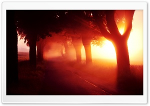 Red Sunset   Tree Lined Road HD Wide Wallpaper for Widescreen