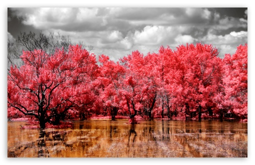 Red Swamp HD wallpaper for Wide 16:10 5:3 Widescreen WHXGA WQXGA WUXGA WXGA WGA ; HD 16:9 High Definition WQHD QWXGA 1080p 900p 720p QHD nHD ; Standard 4:3 5:4 3:2 Fullscreen UXGA XGA SVGA QSXGA SXGA DVGA HVGA HQVGA devices ( Apple PowerBook G4 iPhone 4 3G 3GS iPod Touch ) ; Tablet 1:1 ; iPad 1/2/Mini ; Mobile 4:3 5:3 3:2 16:9 5:4 - UXGA XGA SVGA WGA DVGA HVGA HQVGA devices ( Apple PowerBook G4 iPhone 4 3G 3GS iPod Touch ) WQHD QWXGA 1080p 900p 720p QHD nHD QSXGA SXGA ;