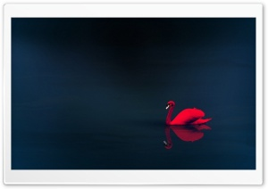 Red Swan HD Wide Wallpaper for Widescreen