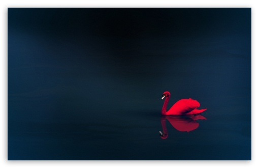 Red Swan ❤ 4K UHD Wallpaper for Wide 16:10 5:3 Widescreen WHXGA WQXGA WUXGA WXGA WGA ; 4K UHD 16:9 Ultra High Definition 2160p 1440p 1080p 900p 720p ; Standard 4:3 5:4 3:2 Fullscreen UXGA XGA SVGA QSXGA SXGA DVGA HVGA HQVGA ( Apple PowerBook G4 iPhone 4 3G 3GS iPod Touch ) ; Smartphone 16:9 3:2 5:3 2160p 1440p 1080p 900p 720p DVGA HVGA HQVGA ( Apple PowerBook G4 iPhone 4 3G 3GS iPod Touch ) WGA ; Tablet 1:1 ; iPad 1/2/Mini ; Mobile 4:3 5:3 3:2 16:9 5:4 - UXGA XGA SVGA WGA DVGA HVGA HQVGA ( Apple PowerBook G4 iPhone 4 3G 3GS iPod Touch ) 2160p 1440p 1080p 900p 720p QSXGA SXGA ;