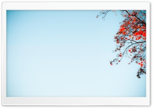 Red Tree Against A Blue Sky HD Wide Wallpaper for Widescreen