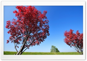 Red Trees HD Wide Wallpaper for 4K UHD Widescreen desktop & smartphone