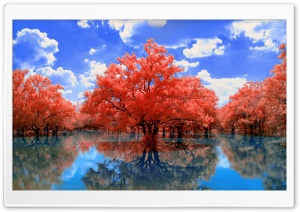 Red Trees HD Wide Wallpaper for Widescreen