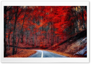 Red Trees - Road HD Wide Wallpaper for Widescreen