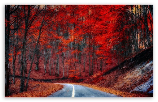 Red Trees - Road HD wallpaper for Standard 4:3 5:4 Fullscreen UXGA XGA SVGA QSXGA SXGA ; Wide 16:10 5:3 Widescreen WHXGA WQXGA WUXGA WXGA WGA ; HD 16:9 High Definition WQHD QWXGA 1080p 900p 720p QHD nHD ; Other 3:2 DVGA HVGA HQVGA devices ( Apple PowerBook G4 iPhone 4 3G 3GS iPod Touch ) ; Mobile VGA WVGA iPhone iPad PSP Phone - VGA QVGA Smartphone ( PocketPC GPS iPod Zune BlackBerry HTC Samsung LG Nokia Eten Asus ) WVGA WQVGA Smartphone ( HTC Samsung Sony Ericsson LG Vertu MIO ) HVGA Smartphone ( Apple iPhone iPod BlackBerry HTC Samsung Nokia ) Sony PSP Zune HD Zen ; Tablet 2 ;