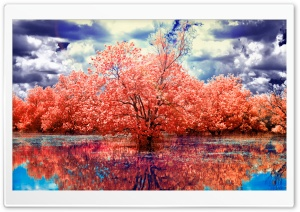 Red Trees Reflected in Blue Water HD Wide Wallpaper for Widescreen