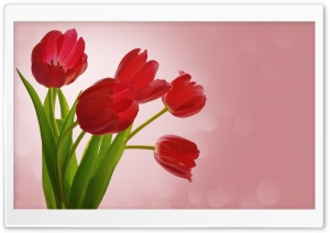 Red Tulips HD Wide Wallpaper for 4K UHD Widescreen desktop & smartphone