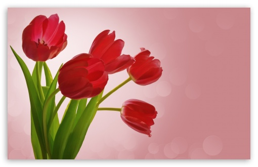 Red Tulips HD wallpaper for Wide 16:10 5:3 Widescreen WHXGA WQXGA WUXGA WXGA WGA ; HD 16:9 High Definition WQHD QWXGA 1080p 900p 720p QHD nHD ; UHD 16:9 WQHD QWXGA 1080p 900p 720p QHD nHD ; Standard 4:3 5:4 3:2 Fullscreen UXGA XGA SVGA QSXGA SXGA DVGA HVGA HQVGA devices ( Apple PowerBook G4 iPhone 4 3G 3GS iPod Touch ) ; Smartphone 5:3 WGA ; Tablet 1:1 ; iPad 1/2/Mini ; Mobile 4:3 5:3 3:2 16:9 5:4 - UXGA XGA SVGA WGA DVGA HVGA HQVGA devices ( Apple PowerBook G4 iPhone 4 3G 3GS iPod Touch ) WQHD QWXGA 1080p 900p 720p QHD nHD QSXGA SXGA ; Dual 5:4 QSXGA SXGA ;