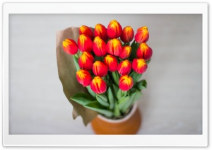Red Tulips Bouquet Wrapped In Paper HD Wide Wallpaper for Widescreen