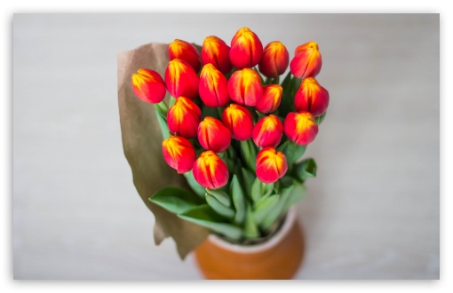 Red Tulips Bouquet Wrapped In Paper ❤ 4K UHD Wallpaper for Wide 16:10 5:3 Widescreen WHXGA WQXGA WUXGA WXGA WGA ; 4K UHD 16:9 Ultra High Definition 2160p 1440p 1080p 900p 720p ; UHD 16:9 2160p 1440p 1080p 900p 720p ; Standard 4:3 5:4 3:2 Fullscreen UXGA XGA SVGA QSXGA SXGA DVGA HVGA HQVGA ( Apple PowerBook G4 iPhone 4 3G 3GS iPod Touch ) ; Smartphone 5:3 WGA ; Tablet 1:1 ; iPad 1/2/Mini ; Mobile 4:3 5:3 3:2 16:9 5:4 - UXGA XGA SVGA WGA DVGA HVGA HQVGA ( Apple PowerBook G4 iPhone 4 3G 3GS iPod Touch ) 2160p 1440p 1080p 900p 720p QSXGA SXGA ; Dual 4:3 5:4 UXGA XGA SVGA QSXGA SXGA ;