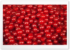 Redcurrant Berries HD Wide Wallpaper for Widescreen