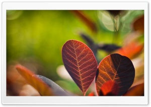 Reddish Leaves Close-up HD Wide Wallpaper for Widescreen